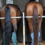 Image for Worauf muss ich achten, wenn ich mein Pferd sicher transportieren will