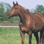 bodenarbeit mit pferd und pferden