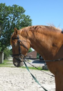 fettpoelsterchen 207x300 Dicke Pferde im Sommer
