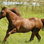 Image for Pferdehaftpflichtversicherung – Schutz vor hohen Kosten