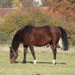 Image for Pferdenamen für Stuten