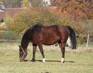 pferdenamen stute mit d